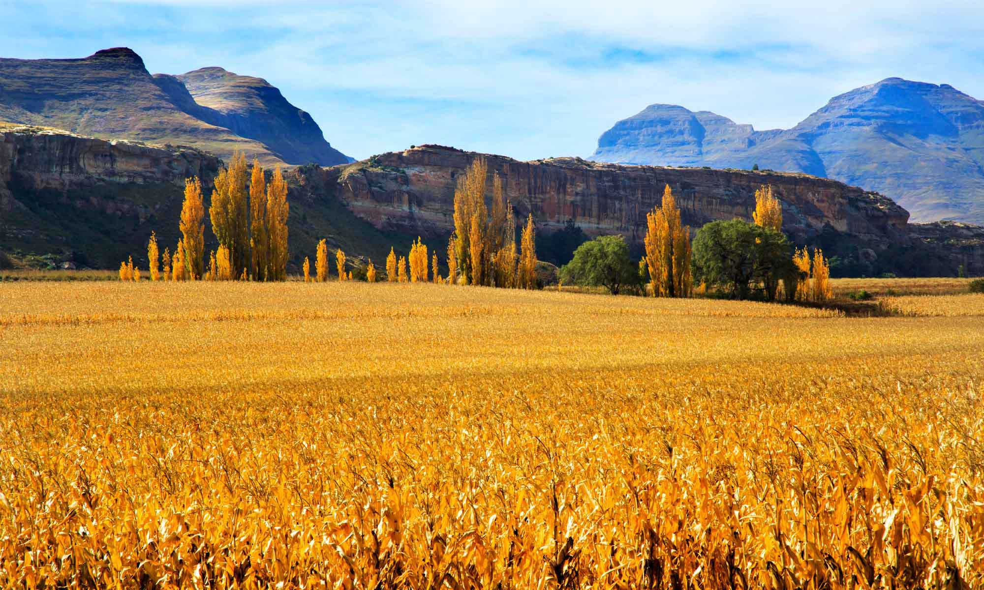 Clarens - History